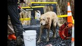 PHOTOS: Responders at scene of deadly Oso mudslide - (5/25)