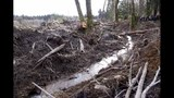 PHOTOS: Deadly mudslide in Snohomish County - (15/25)