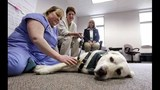 PHOTOS: Dogs a crucial, comforting element in… - (6/20)