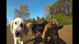 SeattleInsider: Meet the dogs of Seattle dog parks - (19/25)