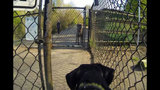 SeattleInsider: Meet the dogs of Seattle dog parks - (15/25)