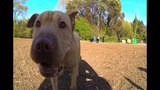 SeattleInsider: Meet the dogs of Seattle dog parks - (4/25)