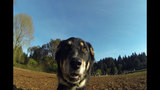 SeattleInsider: Meet the dogs of Seattle dog parks - (20/25)