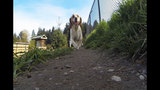 SeattleInsider: Meet the dogs of Seattle dog parks - (25/25)