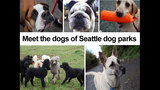 SeattleInsider: Meet the dogs of Seattle dog parks - (8/25)