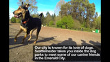 SeattleInsider: Meet the dogs of Seattle dog parks - (1/25)