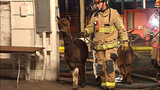 PHOTOS: Firefighters help rescue animals from… - (9/19)