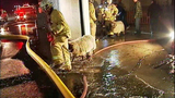 PHOTOS: Firefighters help rescue animals from… - (5/19)
