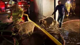 PHOTOS: Firefighters help rescue animals from… - (19/19)