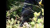 PHOTOS: Crews rescue dog over cliff - (4/13)