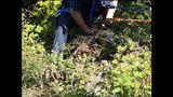 PHOTOS: Crews rescue dog over cliff - (7/13)
