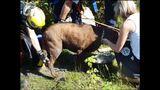 PHOTOS: Crews rescue dog over cliff - (8/13)
