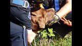 PHOTOS: Crews rescue dog over cliff - (3/13)