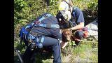 PHOTOS: Crews rescue dog over cliff - (5/13)