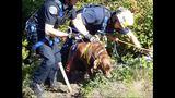 PHOTOS: Crews rescue dog over cliff - (6/13)