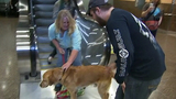 PHOTOS: Marine reunites with 4-legged 'soldier' - (2/13)