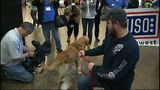 PHOTOS: Marine reunites with 4-legged 'soldier' - (9/13)