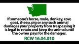 SeattleInsider: 28 UNBELIEVABLE laws that… - (9/25)