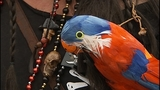 SeattleInsider: Scallywag pirates land on… - (10/25)