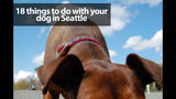 18 things to do with your dog in Seattle - (1/19)