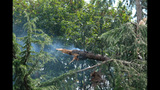 PHOTOS: Lightning strikes tree in Fremont - (9/14)