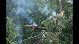 PHOTOS: Lightning strikes tree in Fremont - (7/14)