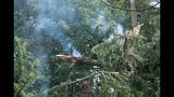 PHOTOS: Lightning strikes tree in Fremont - (7/14)