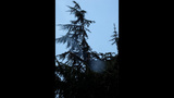 PHOTOS: Lightning strikes tree in Fremont - (6/14)