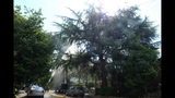 PHOTOS: Lightning strikes tree in Fremont - (10/14)