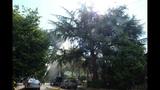 PHOTOS: Lightning strikes tree in Fremont - (10/14)