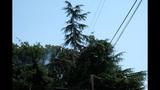 PHOTOS: Lightning strikes tree in Fremont - (12/14)