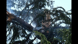 PHOTOS: Lightning strikes tree in Fremont - (3/14)