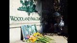 Euthanized Woodland elephant inspires protest… - (6/16)