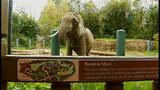Euthanized Woodland elephant inspires protest… - (1/16)
