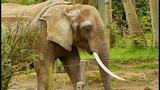 Euthanized Woodland elephant inspires protest… - (4/16)