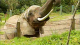 Euthanized Woodland elephant inspires protest… - (9/16)