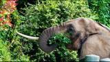 Euthanized Woodland elephant inspires protest… - (10/16)