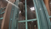 Woodland Park Zoo staff announced Friday that the two remaining elephants will move to the Oklahoma City Zoo. Critics have deemed the current habitat inadequate. Click here for details. (Photos: KIRO 7)