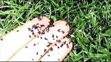 Crumb rubber field_7418593