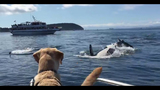 Dog and orca whales_7911521