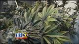 VIDEO: Seattle City Council moves to close pot tax loophole