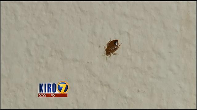 Bed bugs return multiple times to University of Washington dorm