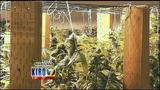 VIDEO: A look inside Seattle's first fully-permitted pot grow operation