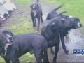 VIDEO: Elderly woman mauled by multiple dogs