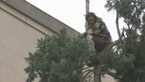 VIDEO: Man descends from downtown Seattle tree