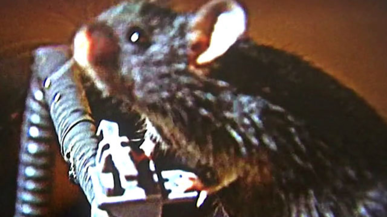 Why Are Rodents Chewing Up Car Wiring Kiro Tv Scama Engine Harness