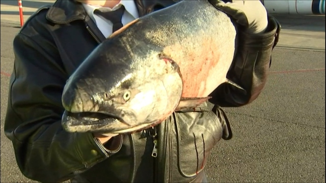 First Copper River salmon to arrive in Seattle