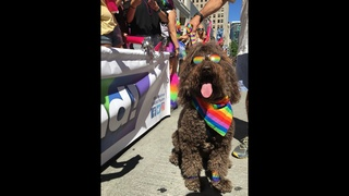 PHOTOS: Seattle celebrates Pride Parade 2016