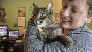 Wash. YWCA opens domestic violence shelter to pets