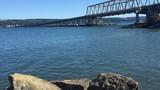 VIDEO: Hood Canal bridge killing fish?